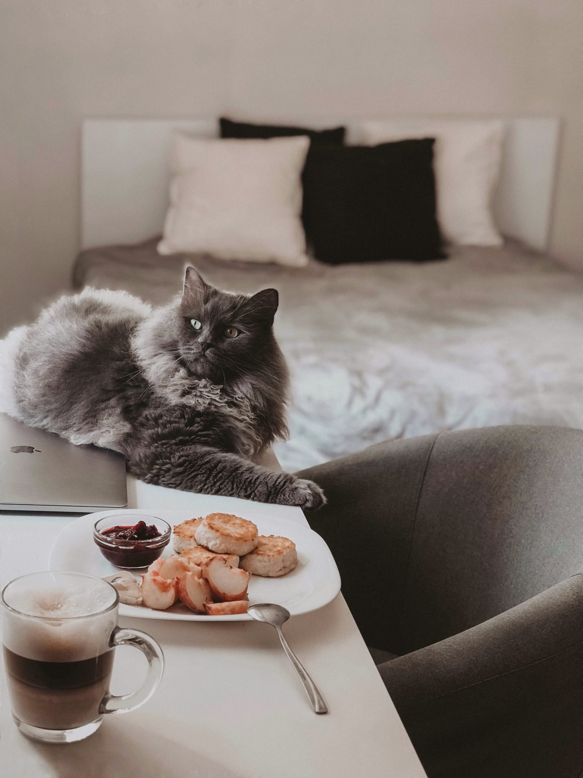 russian blue cat on white bed