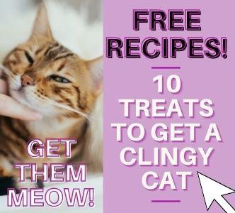Free Cat Treat Recipes